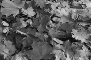 Fall Photo Tips: Include the Color: Black and white photos.