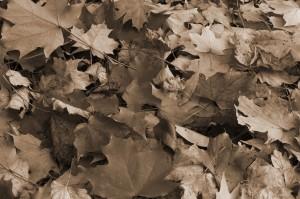 Fall Photo Tips_013
