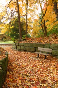 Fall Photo Tips: Include the familiar. my favorite bench!