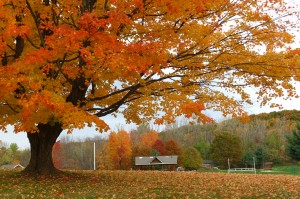 Fall Photo Tips: Include the Familiar. My favorite tree...now gone!