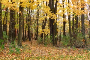 Fall Photo Tips: Include the dramatic: ordinary photo cropped will add interest.