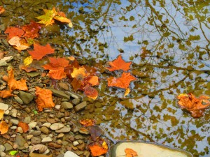 Fall Photo Tips: Include a New Point of View. Shoot from above and get reflections of the trees in the pond below.