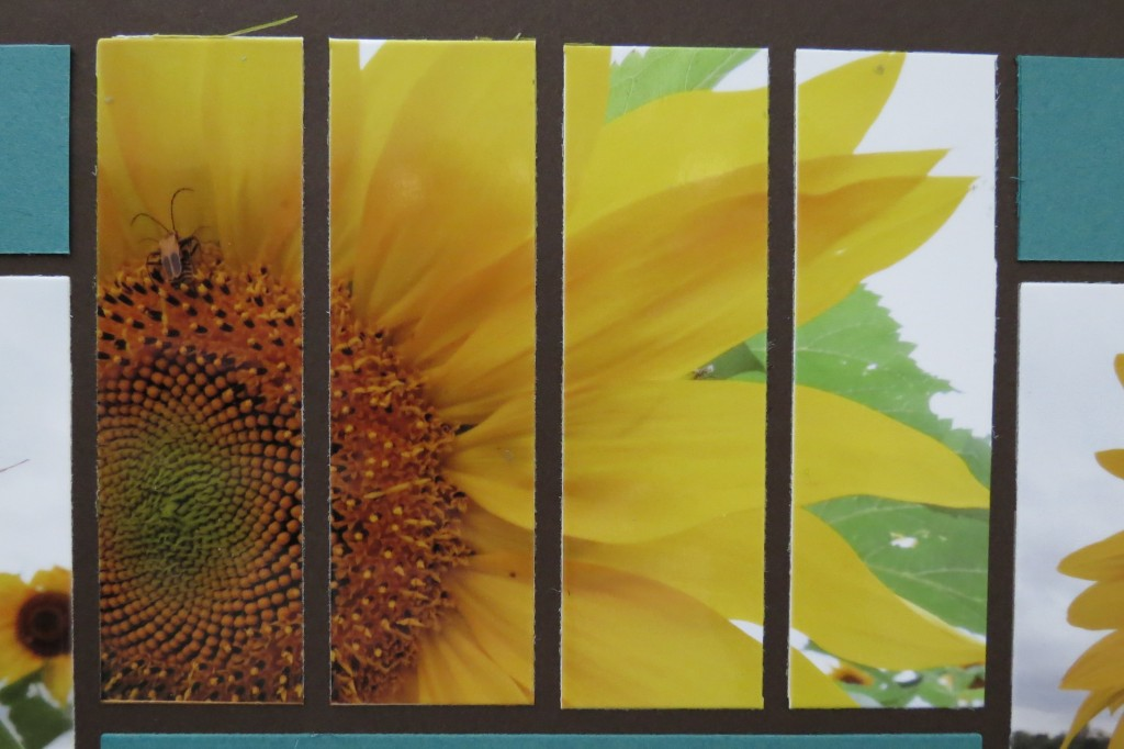 Sunflowers and Mosaic Strips aligning cuts to create focal point on the bug.