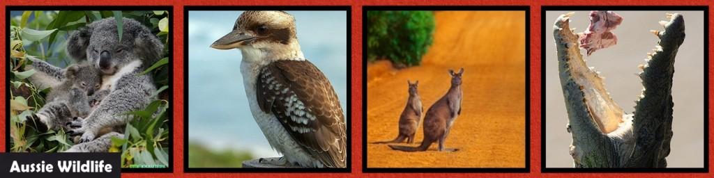 MM_INSP_AO Australian Outback: WIldlife